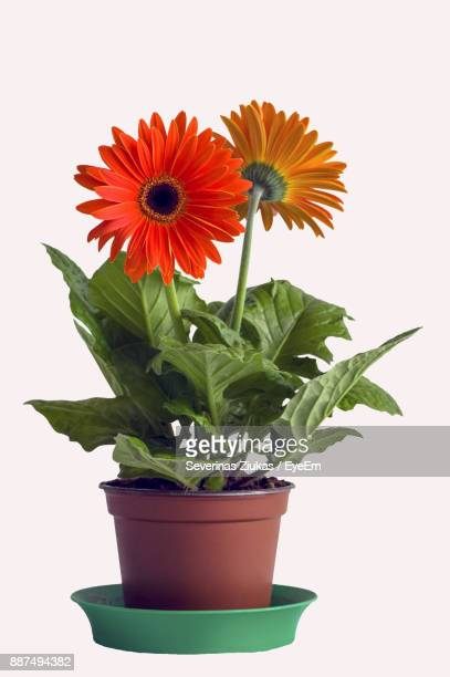 flowers with potted plant against white background - potted plant stock pictures, royalty-free photos & images