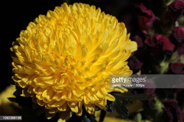 flowers-2014j.jpg - james popple foto e immagini stock