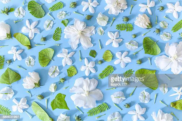 Flowers&leaves, seamless pattern, blue background