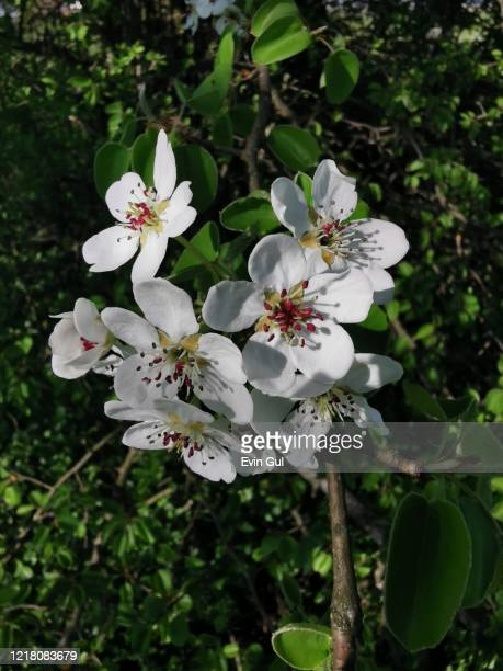 flowers-natur- spring - natur stock pictures, royalty-free photos & images