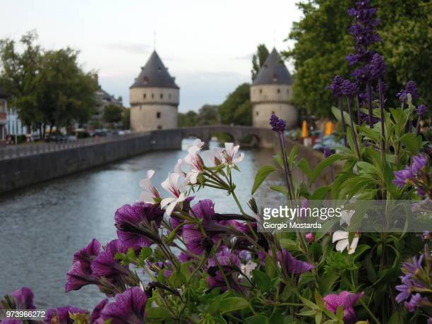 flowers...on the river - tilburg stock pictures, royalty-free photos & images