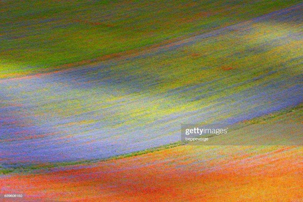 Flowery fields : Stock Photo