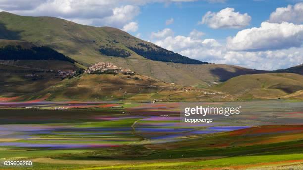 flowery meadows in castelluccio di norcia - castelluccio di norcia foto e immagini stock