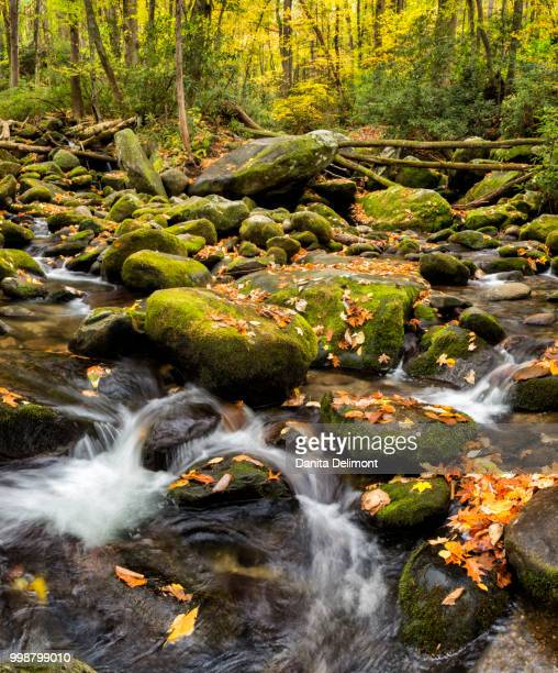 flowing creek along roaring fork motor nature trail, blue ridge, great smoky mountains national park, gatlinburg, tennessee, usa - roaring fork motor nature trail stock pictures, royalty-free photos & images