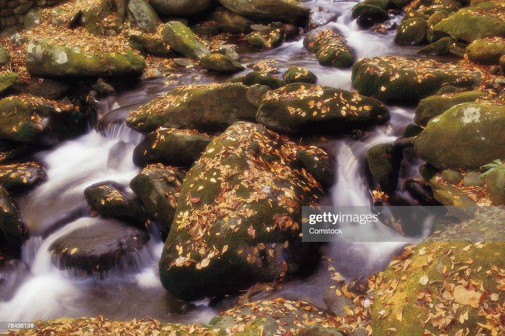 Flowing creek in autumn : Stockfoto