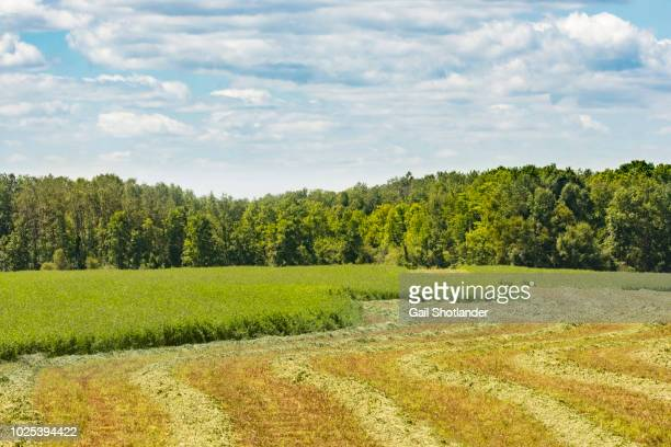 Flowing Cut of the Crops