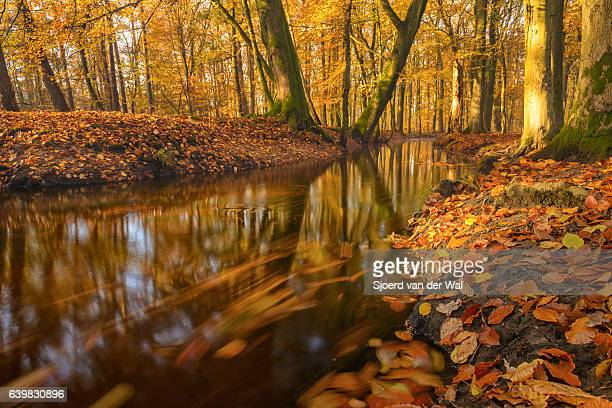 Flowing forest creek during a beautiful day in fall