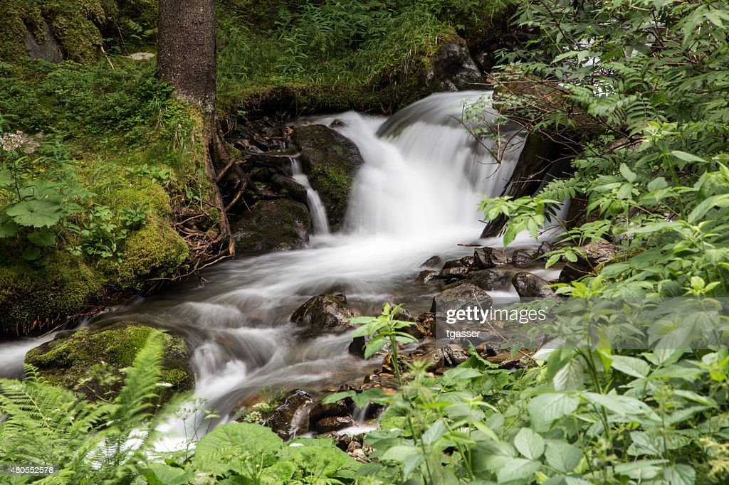 Fluir Rio na floresta : Foto de stock