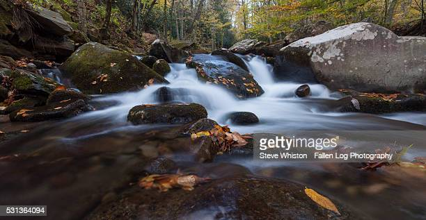 Flowing Stream in Great Smoky Mountains