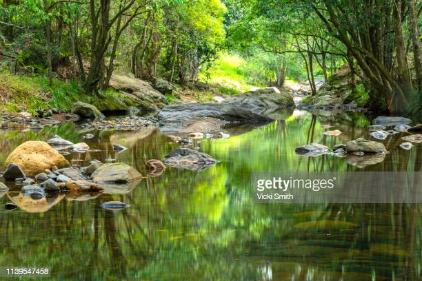 flowing stream with sunlight shining through the trees - river bed stock photos and pictures