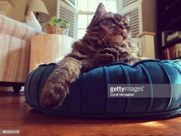 Fluffy Cat Sitting on a Velvet Pillow