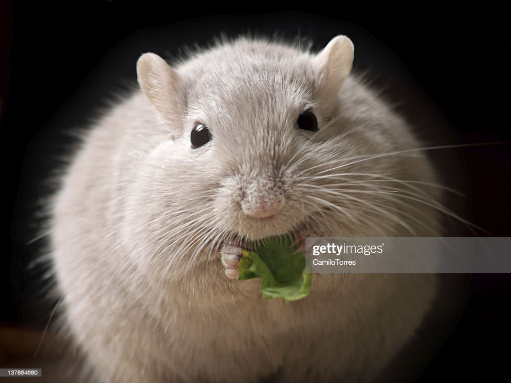 fluffy mouse ball : Stock Photo