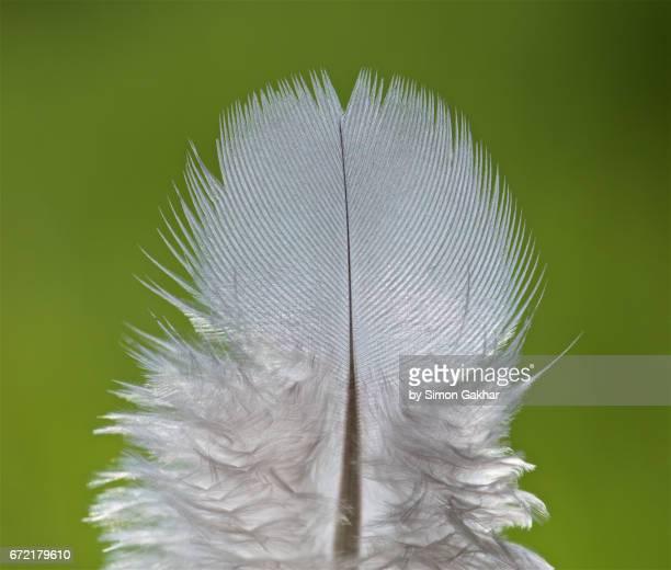 fluffy white feather macro photograph - aerodinâmico - fotografias e filmes do acervo