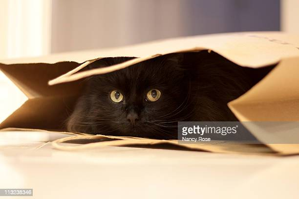 flufy black cat hiding in paper shopping bag - gatto nero foto e immagini stock