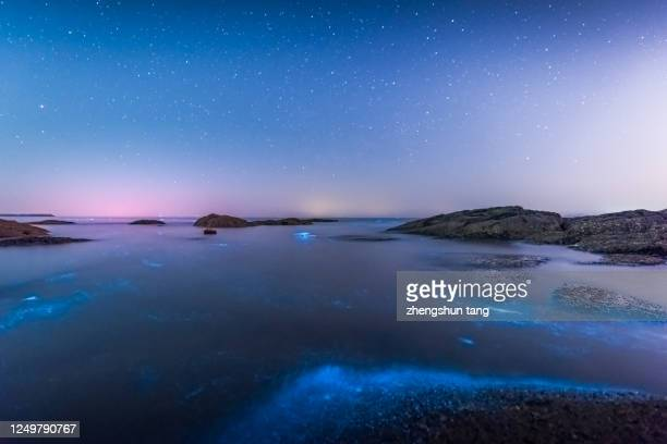 fluorescent beach in yellow sea - plankton stock pictures, royalty-free photos & images