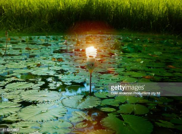 Fluorescent light bulb and lily pads floating in still pond