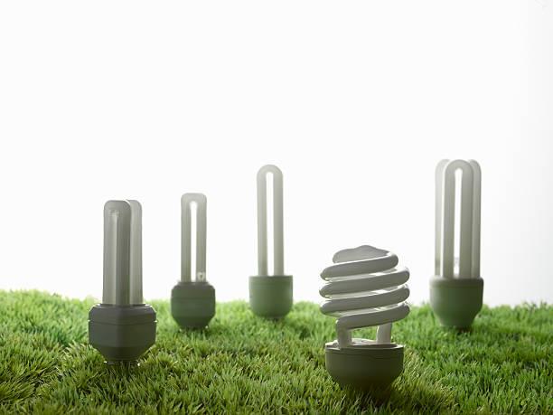 Fluorescent light bulbs in grass