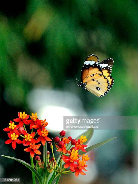 fly away..... fly2 - antananarivo stock pictures, royalty-free photos & images