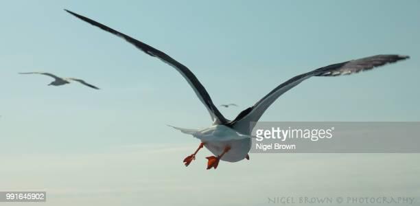 fly away - albatroz imagens e fotografias de stock