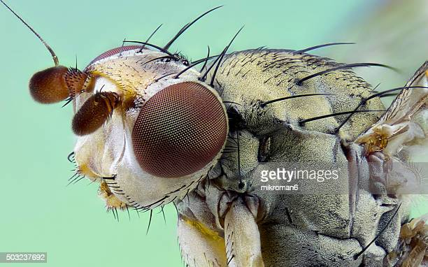 Fly close up