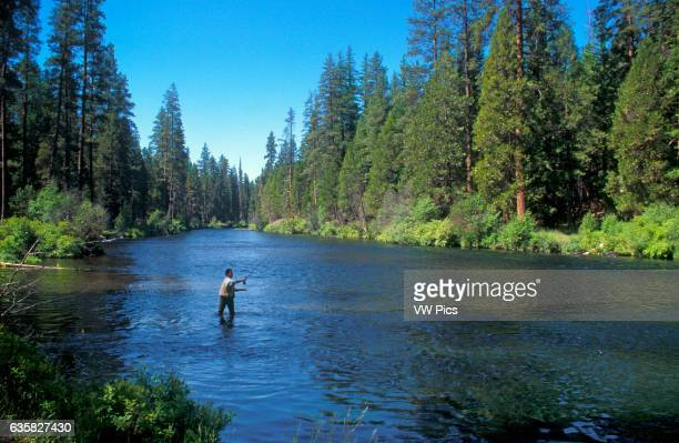 Fly fisherman on the Metolius River; Deschutes National Forest, Cascade Mountains, central Oregon.