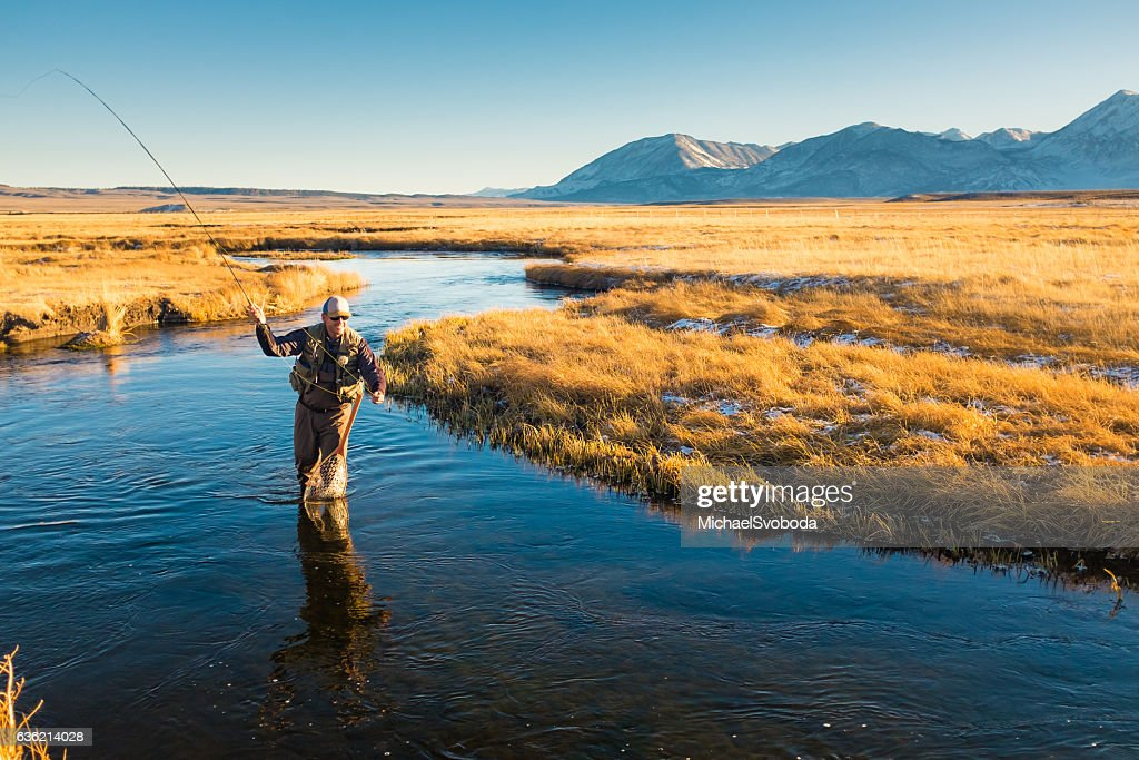 Fly Fisherman On The River Casting : Stock Photo