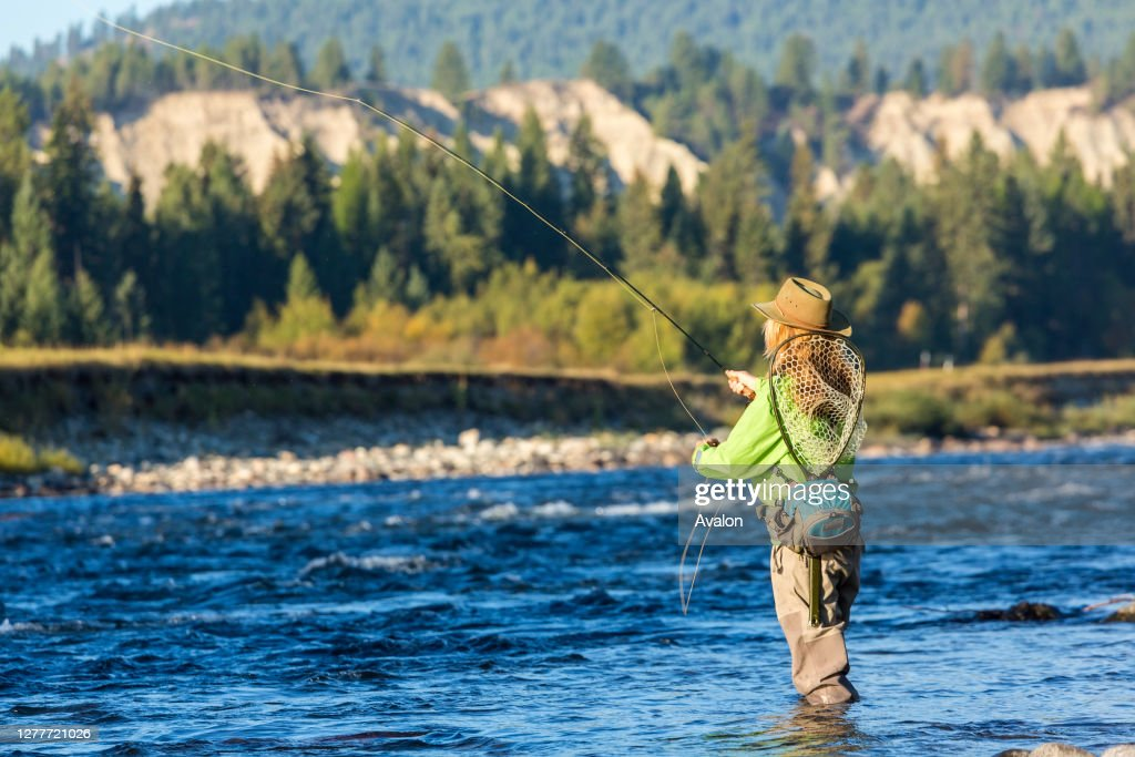 Fly fisherwoman casting and fishing. British Colombia. Canada. : News Photo