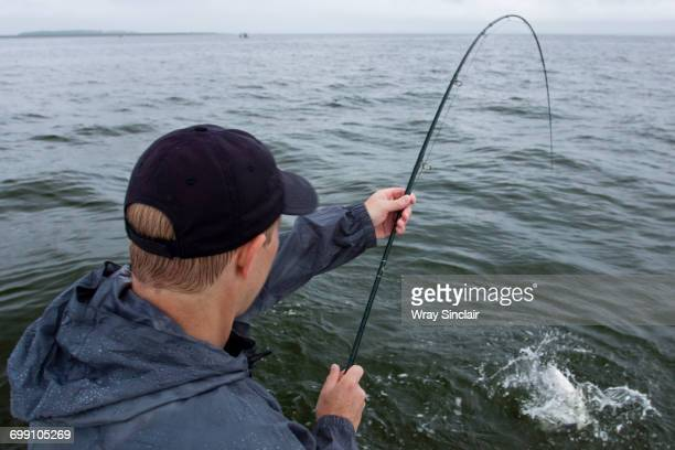 Fly Fishing for Striped bass in the Chesapeake Bay