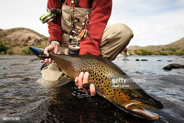 fly fishing the rio limay river near bariloche argentina. - trout stock pictures, royalty-free photos & images