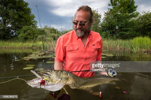 fly fishing with success - big pike catched - northern pike stock photos and pictures
