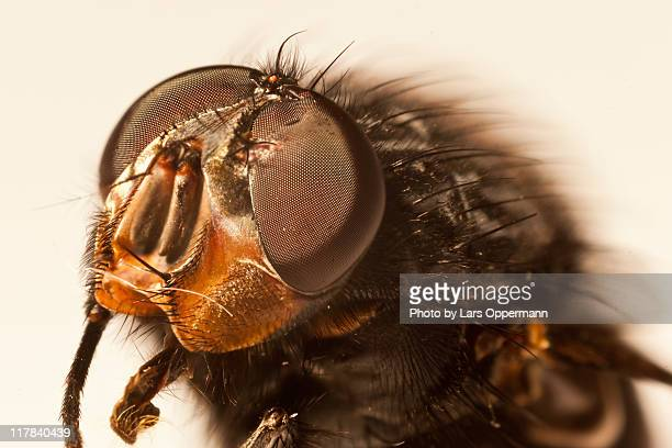 fly head - housefly stock pictures, royalty-free photos & images