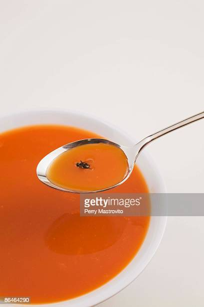 Fly in a bowl of tomato soup
