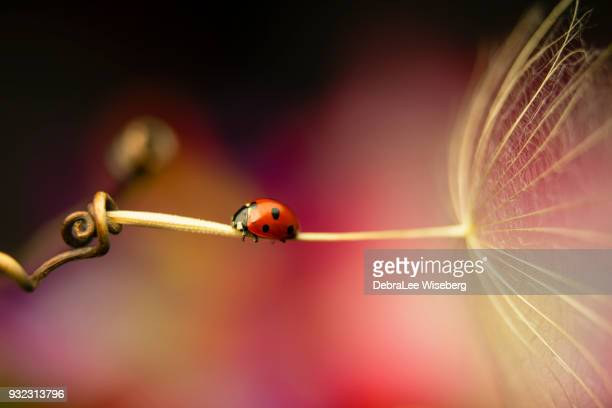 fly me to the moon - ladybird stock pictures, royalty-free photos & images