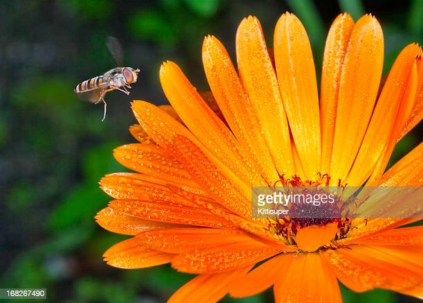 fly on flower - mayfly stock pictures, royalty-free photos & images