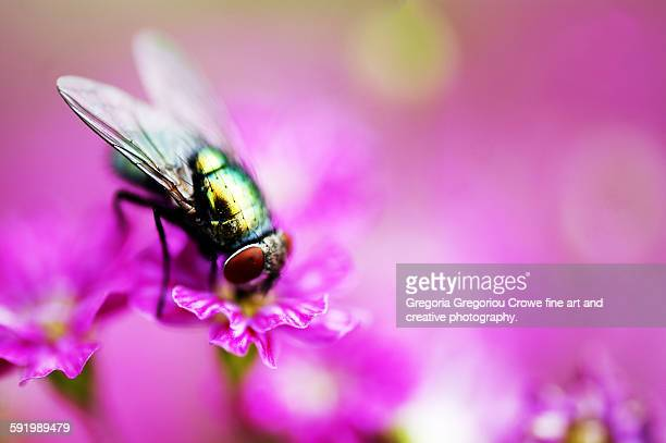 fly on flower - gregoria gregoriou crowe fine art and creative photography. stockfoto's en -beelden