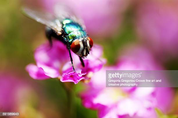 fly on flower - gregoria gregoriou crowe fine art and creative photography stock-fotos und bilder