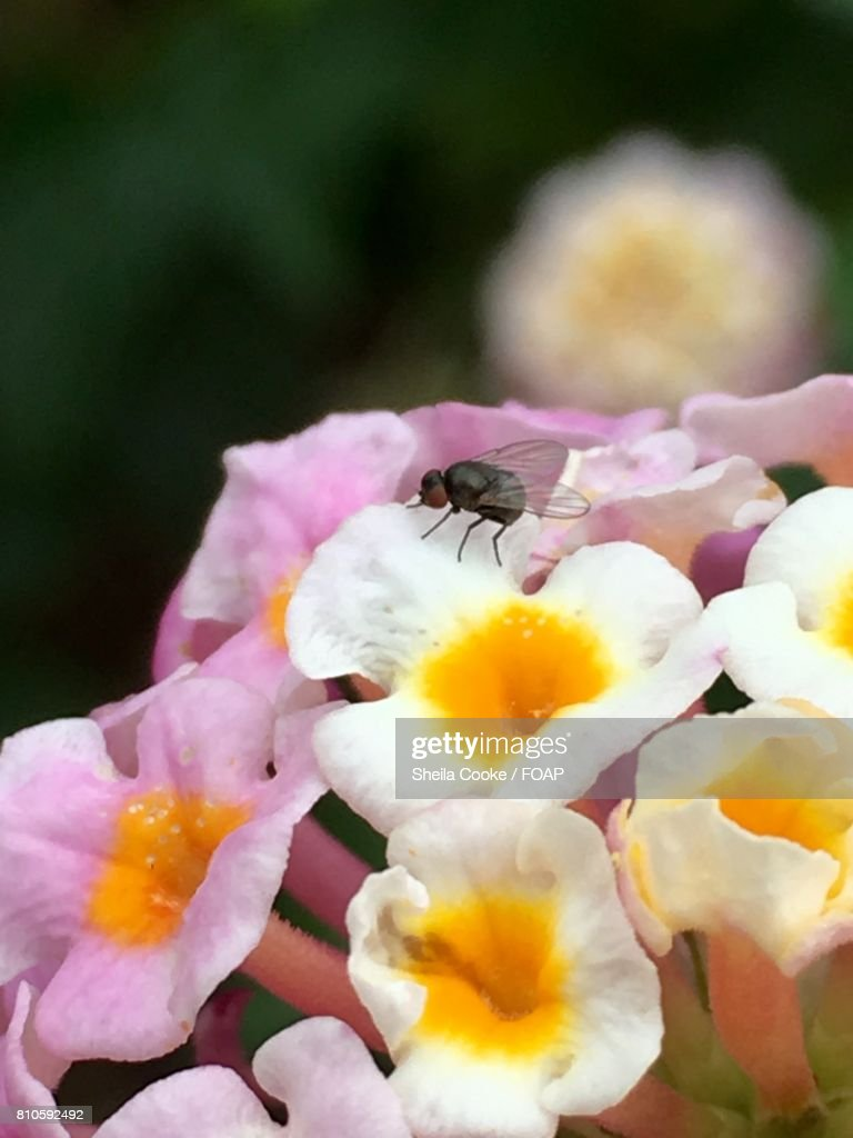 Fly On White And Orange Flowers Stock Photo Getty Images