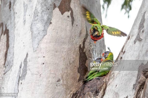 fly - lianne loach - fotografias e filmes do acervo