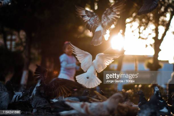 fly - dolores hidalgo stock pictures, royalty-free photos & images
