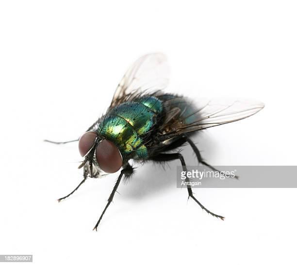 fly (Estacione y Vuele)