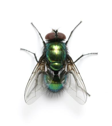 fly 182898513