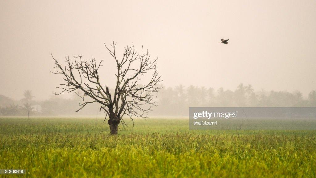 Fly way : Stock Photo