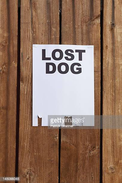 A flyer posted on a wooden fence with the words LOST DOG on it