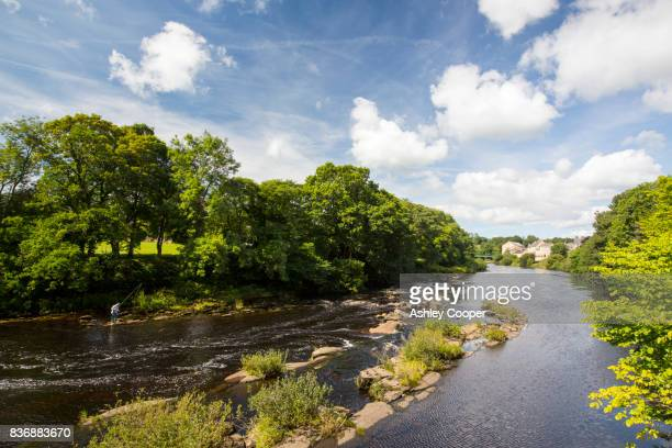 flyfishing on the river tees at barnard castle, county durham, uk. - barnard castle stock pictures, royalty-free photos & images