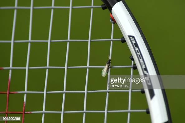 A flying ant rests on the racket of Belgium's Rubens Bemelmans as he plays US player John Isner during their men's singles second round match on the...