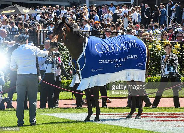 Flying Artie after winning Coolmore Stud Stakes at Flemington Racecourse on October 29 2016 in Flemington Australia