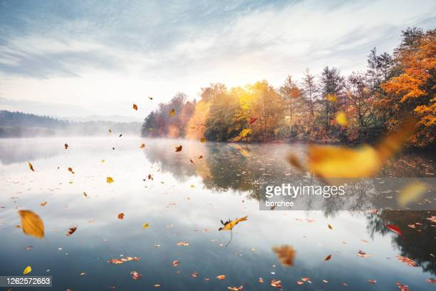 flying autumn leaves - falling stock pictures, royalty-free photos & images
