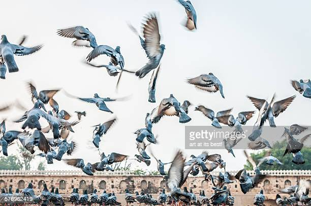 flying away - abhaneri stock photos and pictures