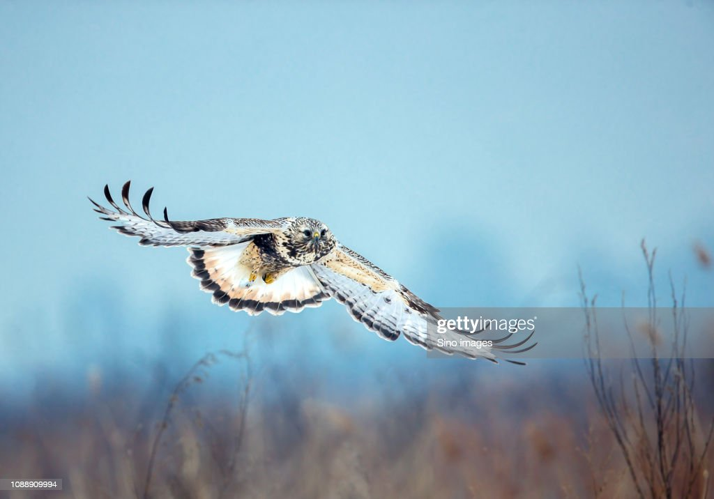 Flying bird against blurry background : Stock Photo