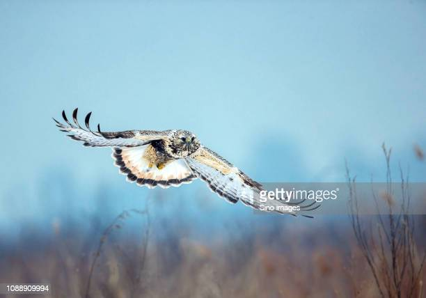 flying bird against blurry background - image stockfoto's en -beelden